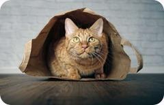 cat_ouutta_bag