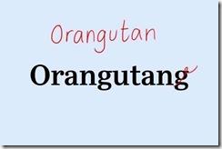 oranqutan