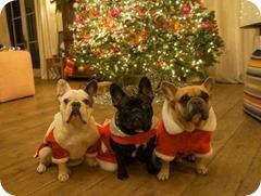 lady_gaga_dogs10